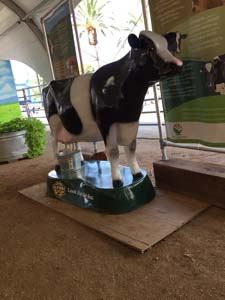 ca-state-fair-display-interactive-cow-milking-072018 (1)